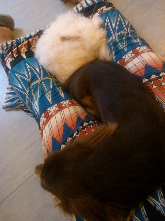Curled Up Furballs on My Lap